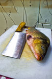 Carp on the cutting Board Royalty Free Stock Photo