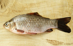 Carp fish Stock Photo