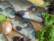 Carp fish Stock Photography