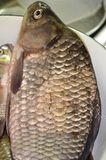 Carp fish is a large brown fish with a large scale, a large head with a retractable mouth and large round eyes. Carp fish-big brown fish with a large scale, a Stock Photography