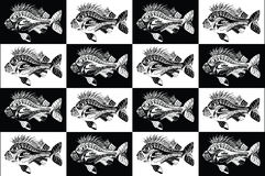 Carp fish collection black and white. Beautiful collection of carp fish in black and white colors. Hand drawn and traced Stock Image