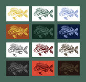 Carp fish collection colored. Beautiful collection of differently colored carp fish. Hand drawn and traced Stock Image