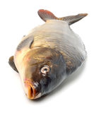 Carp fish Stock Photos