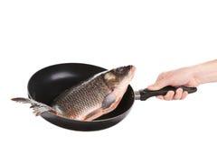 Carp fish on frying pan. Stock Image