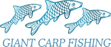 Carp fish illustration.