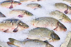 Carp fish lie on ice in supermarket store Stock Photo