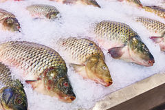 Carp fish lie on ice in supermarket store Stock Images