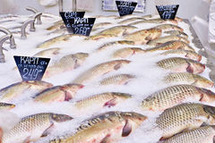 Carp fish lie on ice in supermarket store Royalty Free Stock Image