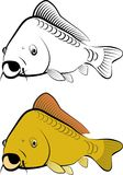 Carp. Fish - line art and color Stock Photography