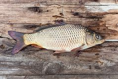 Carp fish over old wooden board Stock Image