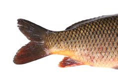 Carp fish tail. Macro. Stock Photos