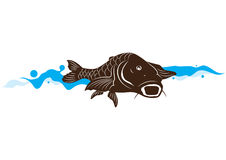 Carp fish, vector illustration Royalty Free Stock Photography
