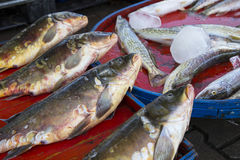 Carp fishes on the bench for sale. A group of carp fishes on the bench for sale Stock Image