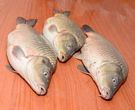 Carp fishes close up, raw meat,  on wood background Royalty Free Stock Photography