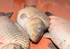 Carp fishes close up, raw meat,  on wood background Royalty Free Stock Photo