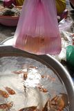 Carp fishes in local market. In Asia mythology, orange carp fishes is not only considered a food but also a mean of transport for kitchen guardians to travel to stock images