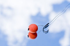 Carp Fishing Bait Royalty Free Stock Images