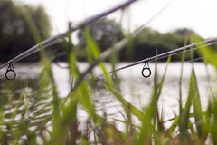 Carp fishing rods Stock Photography