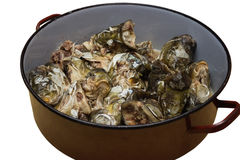 Carp heads in saucepan for making fish head soup 2 Royalty Free Stock Photos