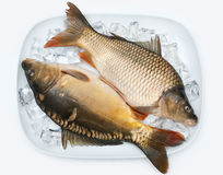Carp on ice Stock Photo