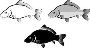 Carp. Isolated carp fish - clip art illustration and line art Stock Photography