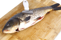 Carp and a knife for cleaning fish. Purified carp and a knife for cleaning fish on the scales Royalty Free Stock Photos