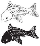 Carp koi. The figure shows a fish carp koi Stock Image