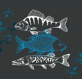 Carp,perch and pike fish stock illustration