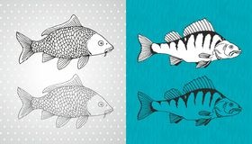 Carp and perch vector fish Royalty Free Stock Image