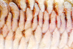Carp scales. (texture, background, decoration Stock Photography