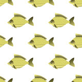 Carp Seamless Pattern. Set of Fish Isolated on White Background. Carp Seamless Pattern Stock Photos