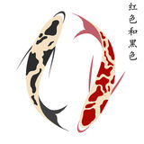 Carp, set of koi carps, red and black fish Royalty Free Stock Photo