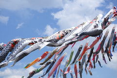 Carp streamer. At Children's Day.Traditional event of Japan Royalty Free Stock Image
