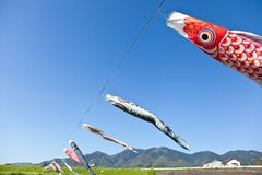 Carp streamer. This is a picture of carp streamers is decorated on the day of children Stock Photography