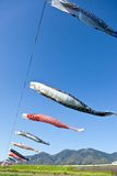 Carp streamer. This is a picture of carp streamers is decorated on the day of children Royalty Free Stock Photography