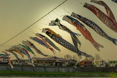 Free Carp Streamers Or Koinobori Over The Kitakami River Blowing In Strong Wind At Tenshochi Park,Kitakami,Iwate,Tohoku,Japan. Stock Image - 128551601