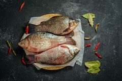 Carp. Three crucian carp fishes on a black background with copy space Royalty Free Stock Photos