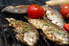 Carp with thyme. And tomatoes on barbecue Stock Photo