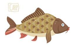 Carp, vector cartoon illustration Royalty Free Stock Images