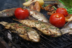 Carp With Thyme Royalty Free Stock Photo
