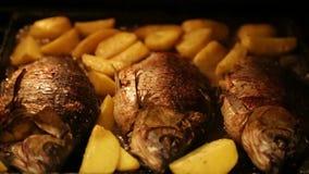 Carpa arrostita con le patate nel forno video d archivio
