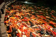 Peixes de Koi na lagoa no jardim foto de stock royalty free