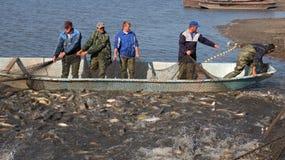 Carpa de la cosecha de los pescadores delante de la Navidad Imágenes de archivo libres de regalías