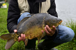 Carpa del pesce Fotografie Stock