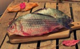 Carpa del pesce crudo su un tagliere della cucina con l'occhi rossi Immagini Stock Libere da Diritti