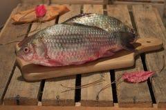 Carpa del pesce crudo su un tagliere della cucina con l'occhi rossi Fotografie Stock Libere da Diritti