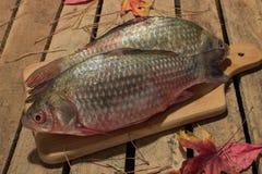 Carpa del pesce crudo su un tagliere della cucina con l'occhi rossi Immagini Stock