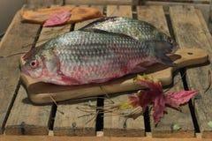 Carpa del pesce crudo su un tagliere della cucina con l'occhi rossi Immagine Stock