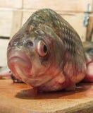 Carpa del pesce crudo su un tagliere della cucina con l'occhi rossi testa Immagine Stock