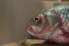 Carpa del pesce crudo su un tagliere della cucina con l'occhi rossi testa posto per l'etichetta Immagini Stock Libere da Diritti